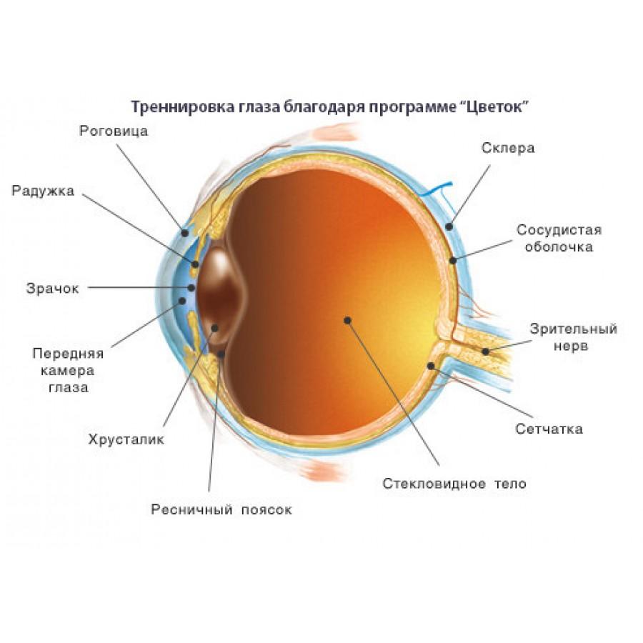 Программа для глаз цветок